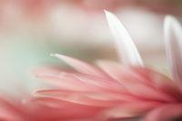 Awareness comes from October pink petals.